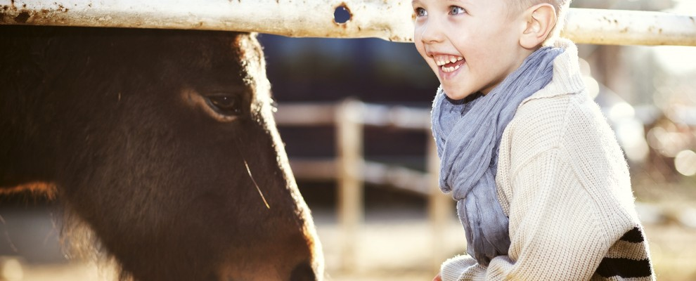 Smiling child with pony in mini zoo